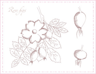 Rosehips and fruits