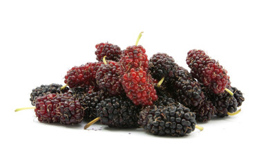 mulberry on cup