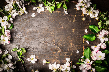 Frame of fruit trees flowers on rustic background, top view Wall mural