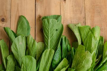 Fresh organics green Chinese Cabbage, Bok Choy, Pok Choi or Pak Choi