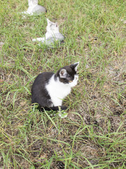 Котята в траве отдыхают летний день
