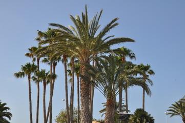 Palmen auf Lanzarote
