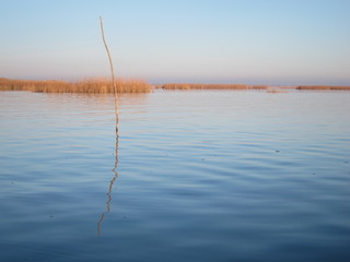 Calm autumn lake with dry reeds in the evening sun