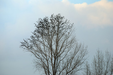 Birds storm on the tree