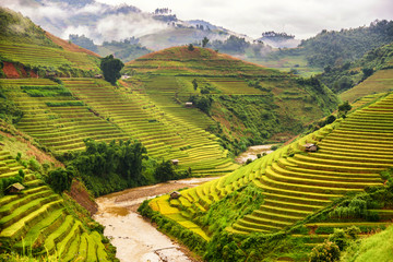 Beautiful landscape view of rice terrace in Mu cang chai