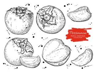 Vector hand drawn persimmon set.