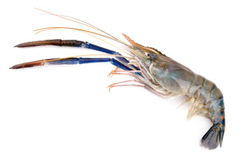 Fresh shrimp, Giant freshwater prawn on white