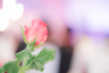 Blurred background : Red rose on blur light in restaurant, vinta