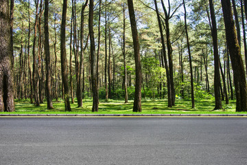 Roadside and forest