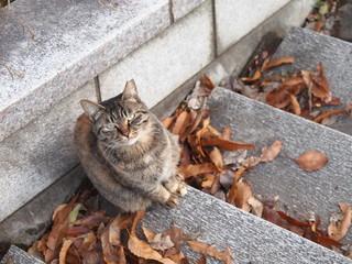 見上げる階段の猫