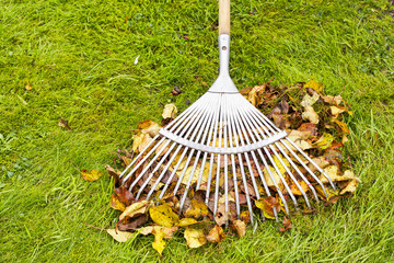 Autumn leaves and rake cleaning on green lawn