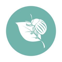 Colorado potato beetle icon