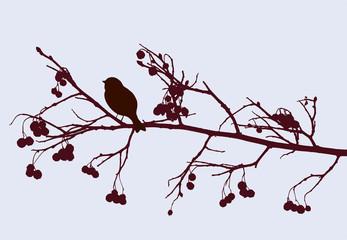 bird on a rowan branch
