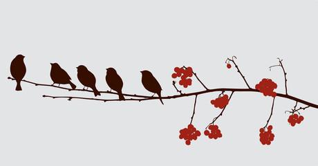 birds on the rowan branch