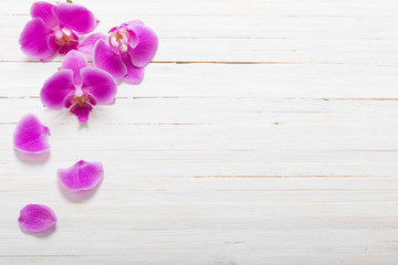 Orchid on white wood background
