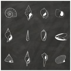 White stripe seashells