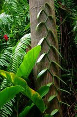 La Réunion - Un coin de jungle : vanille