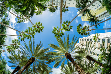 Photo on textile frame United States Low angle view of palm trees, Miami Beach, USA