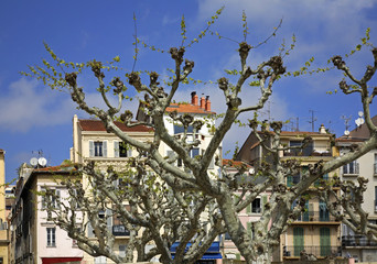 Tree in Cannes. France