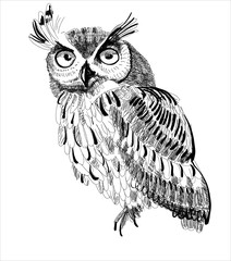 owl hand-drawing on a white background