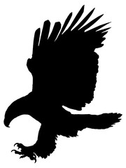 Silhouette of an eagle attacking isolated on white background.