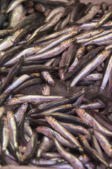Fresh sardines and anchovies