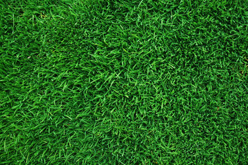 Aluminium Prints Grass real green grass background