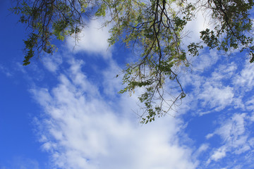 Landscape of cloudy sky (Use branch as picture frame)