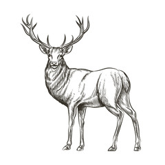 Hand drawn deer