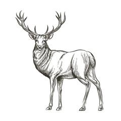 Wall Mural - Hand drawn deer
