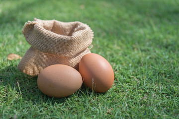 Sack fresh egg on a green grass