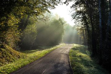 chemin dans la forêt dans la lumière brumeuse d'un matin d'automne