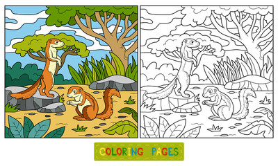 Coloring book (ground squirrel, xerus)