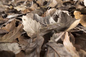 Seasonal sadly and romantic autumn leaves background