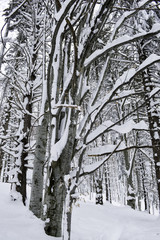 Snow Covered Trees in the Mountains. Winter Landscape.