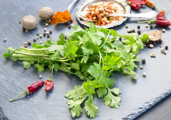 Bunch of fresh coriander herb with spices
