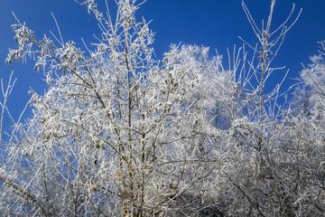 frozen tree. Color image