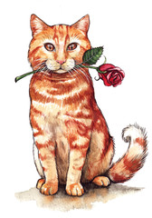 Ginger Cat and a Rose