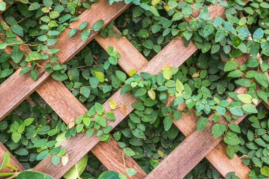 Treliça de madeira com plantas.