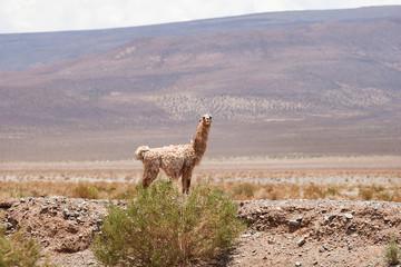 Andes in northern Argentina; Salta Jujuy