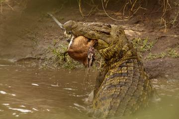 Printed roller blinds Crocodile Krokodil mit Beute