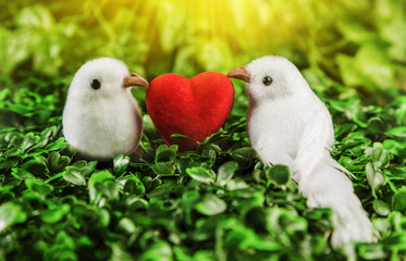 The concept of Valentine's Day two little white bird the lovers, heart covered sunshine on the background of nature.