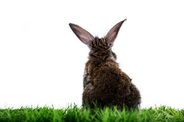 rabbit on green grassland