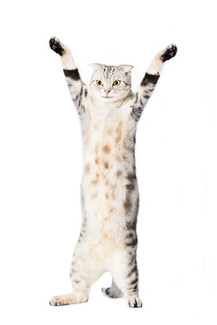 cat are standing and rising hand