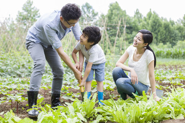 A happy family gardening together in vegetable garden