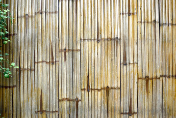 Bamboo fence with plants