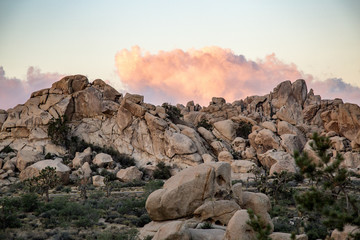 Dawn in the Joshua Tree National park sunrise