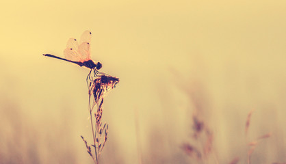 retro styled of dragonfly on grass