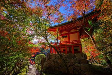 Colorful tree leaves around Daigoji temple,  Kyoto