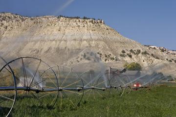 Irrigating hay field in Utah